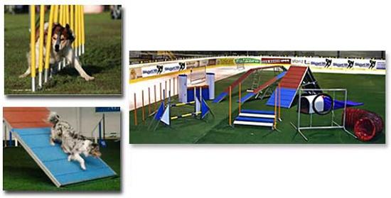 Foto de Obstáculos para el entrenamiento de mascotas