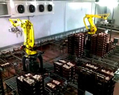 Foto de Instalaciones de paletizado con robots