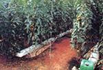 Foto de Fibra vegetal de origen natural