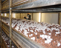 Foto de Malla para champiñones y compost