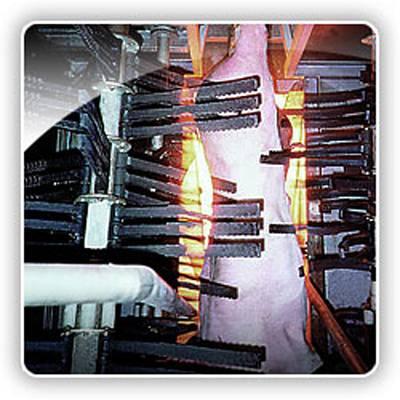 Foto de Flageladores de secado