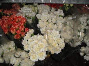 Foto de Flores cortadas de claveles