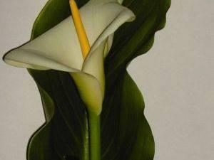 Fotografia de Flores tallades de cales