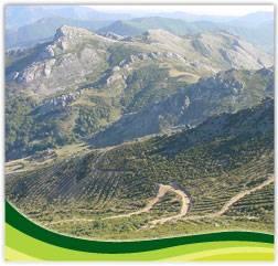 Foto de Obras y servicios forestales