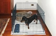 Foto de Casetas educativas para cachorros
