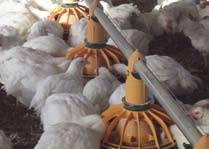 Foto de Equipos para el bienestar avícola