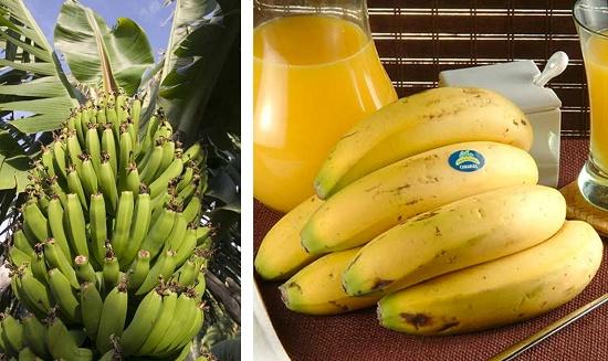 Foto de Plátanos de canarias