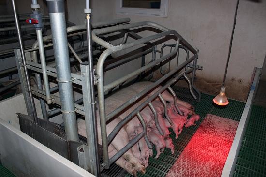 Foto de Rejillas para suelos de granjas porcinas