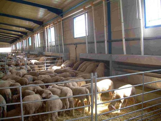 Foto de Comederos para ganado ovino