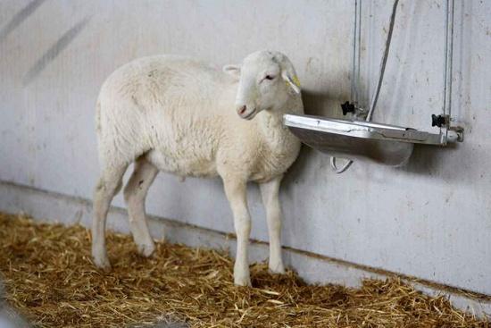 Foto de Bebederos para ganado ovino