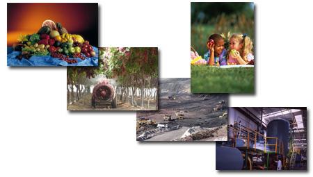Desarrollo Agrícola y Minero, S.A. (Daymsa)