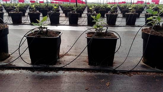 Foto de Macetas para cultivo hidropónico