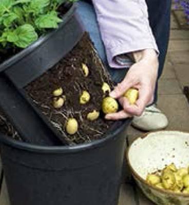 Foto de Macetas para plantar patatas