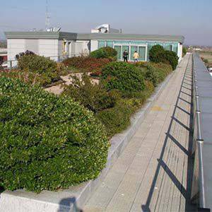 Foto de Sistema de cubierta verde