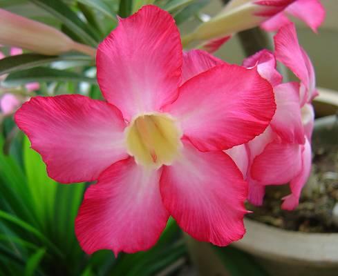 Foto de Sustratos profesionales para planta de primavera