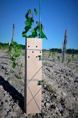 Foto de Tubos biodegradables