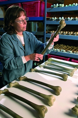"Foto de ""Huesos artificales para pruebas médicas"""