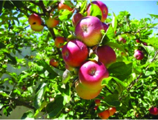 foto de abono orgnico